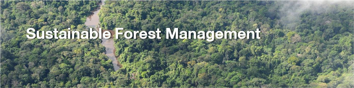 Sustainable Forest Management ~ Greenheart group